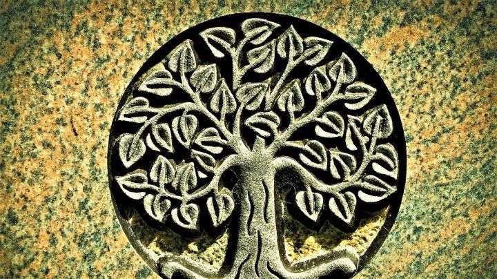 El-árbol-de-Adán_-Casi-literal.jpg