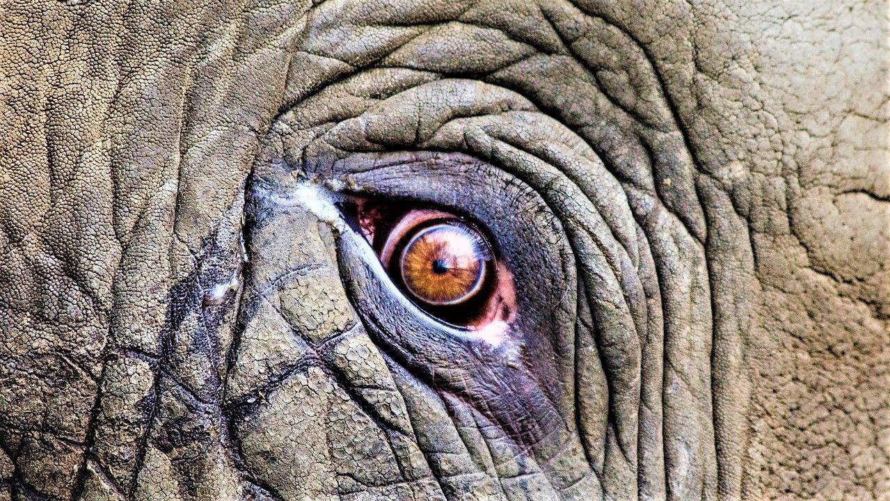 La-evolucion-y-los-elefantes_-Casi-literal.jpg
