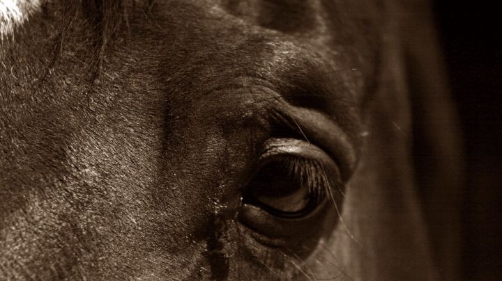 equus-un-drama-de-la-diversidad-sexual_-casi-literal1.jpg
