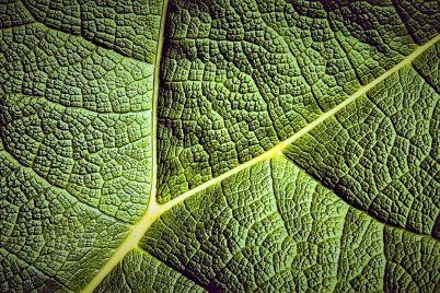 lo-que-aprendc3ad-de-las-plantas_-casi-literal.jpg