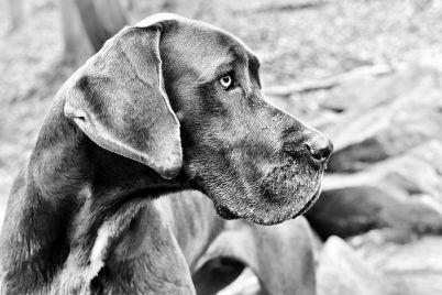 the-friend-un-libro-hecho-perro_casi-literal.jpg